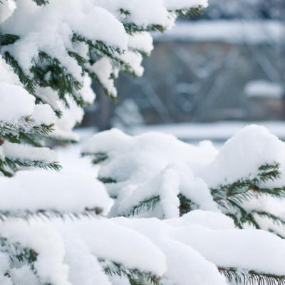 宙のドームの使用例 ドームで過ごす冬
